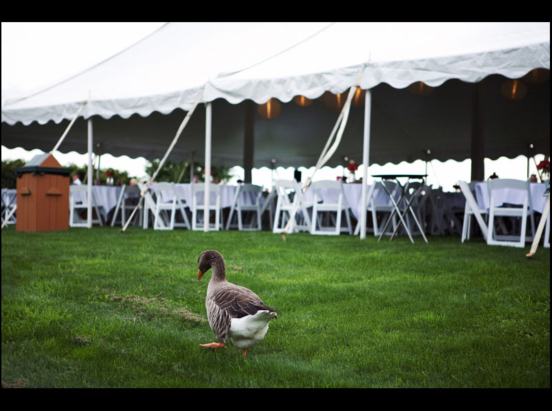 Outdoor Tent at Armstrong Farms Fieldstone Barn